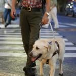 同じ人間として恥ずかしい・・・盲導犬オスカーを刺した人名乗り出てくださいよ