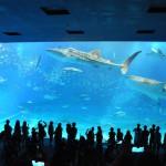 沖縄旅行記その11【美ら海水族館は何度行っても飽きないよ!割引チケットで入館】