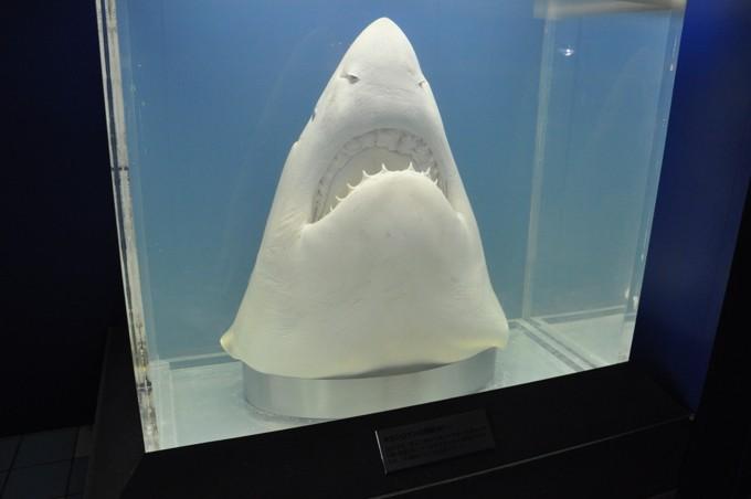 須磨水族館 ホオジロザメ