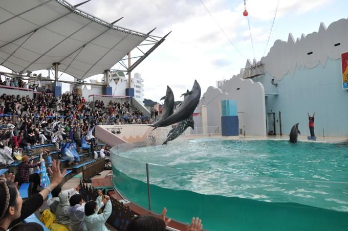 須磨海浜水族館 イルカ ジャンプ