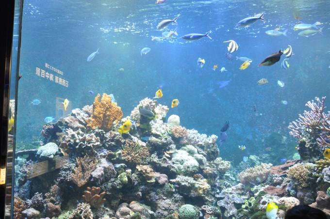 須磨水族館 珊瑚