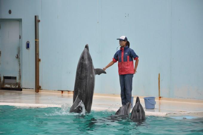 須磨海浜水族館 イルカショー
