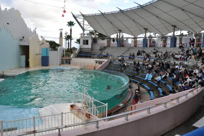 須磨水族館 イルカライブ