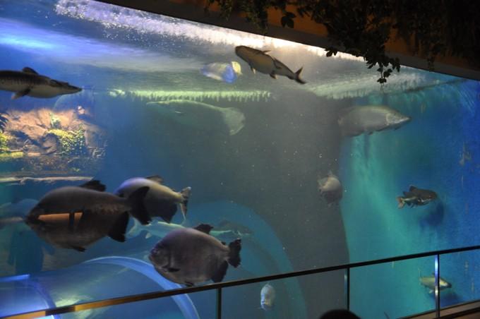 須磨海浜水族館 淡水魚