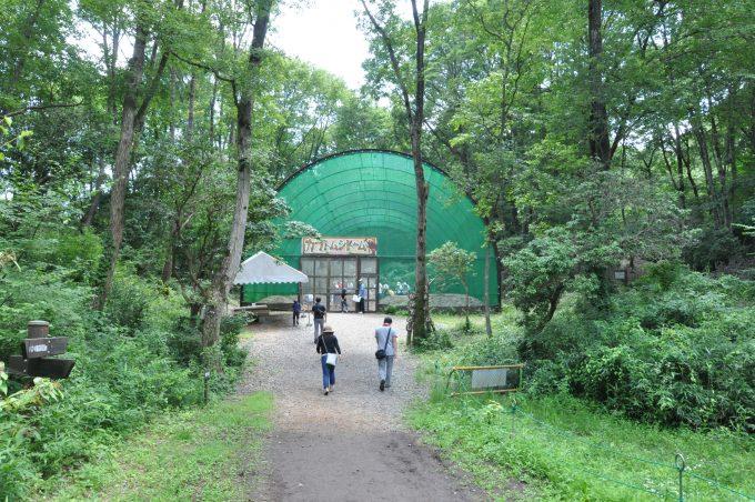 カブト虫ドーム