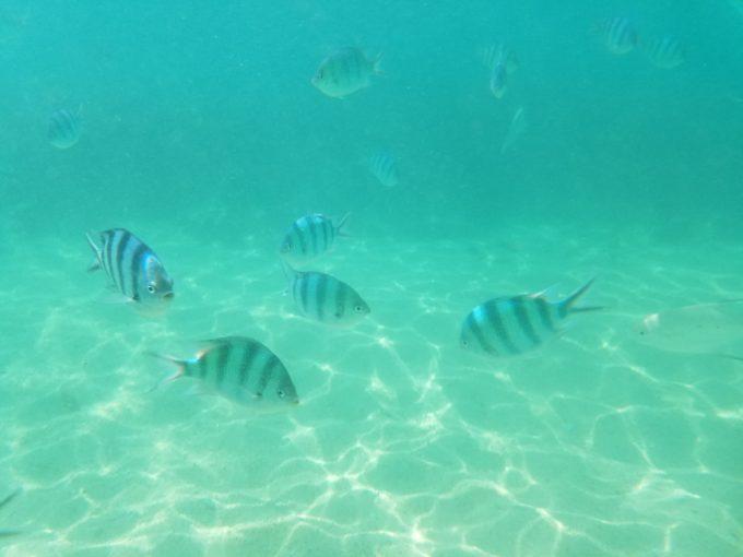 大泊ビーチ 熱帯魚